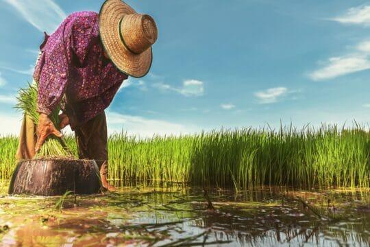 7 retos post COVID-19 para la agricultura en México